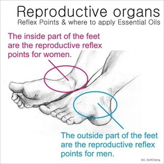 Where to apply oils for reproductive organs... I only use and recommend Young…