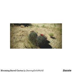 Blooming Barrel Cactus Canvas Print