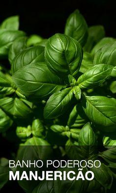 Healthy Habits, Healthy Life, Tea Plant, White Magic, Healing Herbs, Wicca, Feng Shui, Herbalism, Medicine