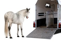 how to load a horse in a trailer, kevan garecki, my horse won't load, horse trailering, train a horse for trailer, de-spook horse, claustrophobic horse tranquilizers, horse sedation, equine sedation, acepromazine horse