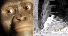 Crônicas Americanas: A Lucy caiu da árvore