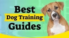 VIDEO MARKETING Marketing Pdf, Marketing Software, Online Marketing, Thumbnail Design, Video Security, Internet Advertising, Learn Photoshop, Youtube Thumbnail, Best Dog Training