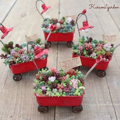 Succulents In Containers, Cacti And Succulents, Planting Succulents, Fairy Garden Plants, Fairy Garden Houses, Succulent Gardening, Succulent Terrarium, Plant Projects, Garden Projects