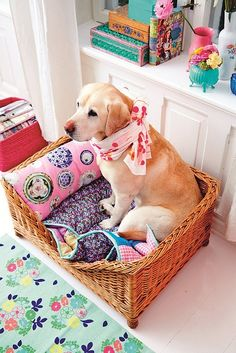 Adorable dog bed