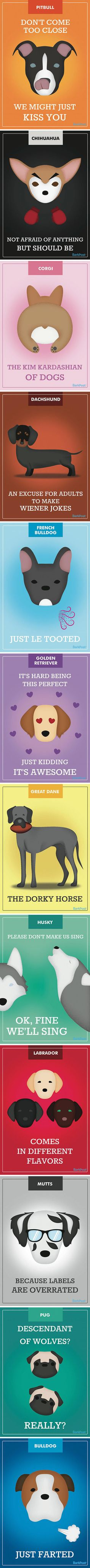 12 Honest Dog Breed Slogans That Make Fun Of Stereotypes