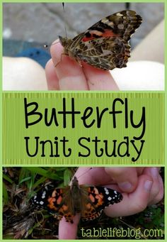 We use summer to explore interesting topics through unit studies. This year, we kicked off our time of summer learning with a butterfly unit study.