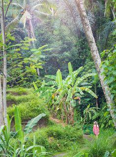 The incredibly beautiful Tegalalang Rice Terrace in Ubud, Bali <3