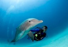 Scuba diver and dolphin...Bahamas