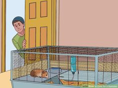 How to Care for a Hamster. There are several kinds of hamsters and most live for about years. Hamsters are nocturnal creatures, which means that they like to sleep all day. However, dwarf hamsters are crepuscular, meaning they are most. Guinea Pig Toys, Guinea Pig Care, Guinea Pigs, Chinese Hamster, Syrian Hamster, Cute Hamsters, Dwarf Hamsters, Humane Society, Bearded Dragon Vivarium