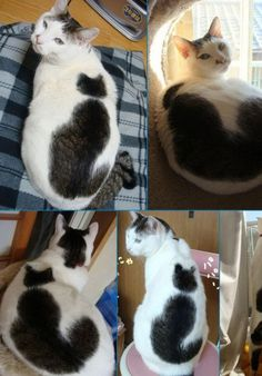 "Inception cats, looks just like our heart stamped ""stray"" cat."