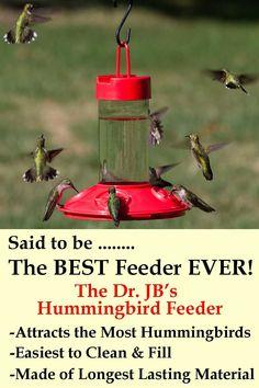 Zummr Hummingbird Ring Feeder Feed Feeding Birds Garden Decor Red Attract