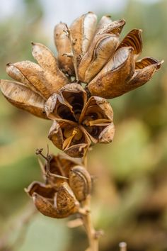 Seed Pods by karolmayo - Karol Mayo