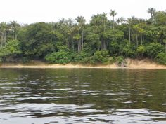 Margem do Rio negro, Manaus, AM