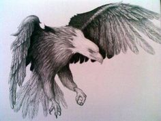 Drawing Eagle of Pencil Sketches | eagle-pencil-drawing-cye-wright