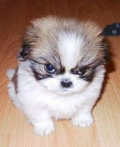 Angry Puppy!