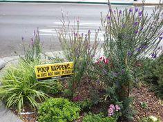 Crseton BC Shit Happens, Plants, Plant, Planting, Planets