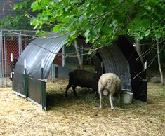 Hoop Shelter made with cattle panels, t-posts and a couple tarps.