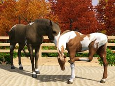 Sims 3 Horses for Sale | Re: Alain's album-Refugee camp (Stable is closed)