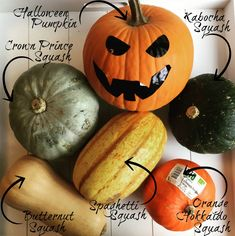 6 types of pumpkins :) - what is your favorite kind??