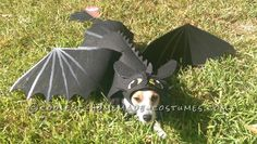 Awesome DIY How to Train Your Dragon Dog costume... Coolest Halloween Costume Contest