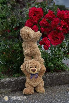 Two cute teddybears – Cute Love Wallpaper Teddy Bear Images, Teddy Bear Pictures, My Teddy Bear, Cute Teddy Bears, Tatty Teddy, Ours Boyds, Teddy Hermann, Teady Bear, Elephant Stuffed Animal