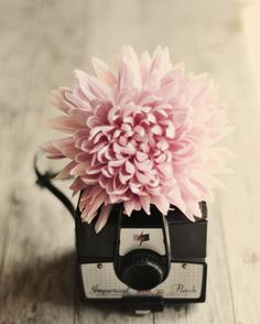 Vintage camera flower photograph pink cream beige by dullbluelight