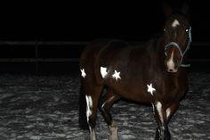 Horse & Pet Reflective Spray
