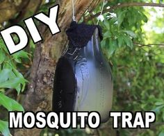 How to Make an Ovitrap Mosquito Trap: Do you have a major mosquito problem? Well, here's a solution used by the military to drastically cut down their numbers. Mosquito Yard Spray, Diy Mosquito Repellent, Mosquito Larvae, Mosquito Trap, Mosquito Control, Mosquito Repelling Plants, Mosquito Killer, Insect Repellent, Diy Pest Control
