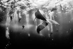Stunning 'Whale Whisperer' shot crowned 2015's top travel photo