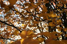 Autumn leaves #photography #art #outside #nature #autumn