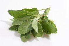 L'hydrolat de Sauge, pour les cheveux ternes, pour la peau, pour diminuer la transpiration et clarifier le mental.