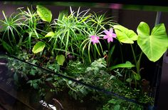 A Few Planted Ripariums - Orchid Board - Most Complete Orchid Forum on the web !
