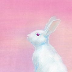 Bunny on pink
