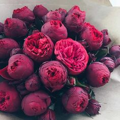 Wow, are these peonies? I've never seen such a dark, rich peony before. These would be perfect in a winter-wedding bouquet.