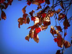 赤い実:魚の庭 2012-10-24