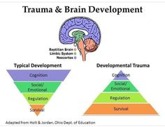 The impact of trauma on brain development. Trauma increases the focus on survival and decreases the development of learning and cognitive skills. Trauma Therapy, Therapy Tools, Art Therapy, Mcdonald, Mental Health Counseling, Coaching, Emotional Regulation, Social Emotional Learning, Ptsd