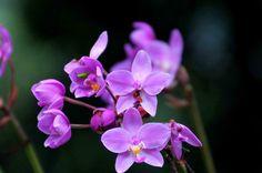 #Flora #Orchid