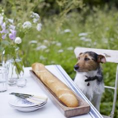 my jack russell would never just sit there by a baguette...this is adorable!