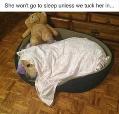 I have TWO that are like this, I have to set off to bed half hour earlier just to tuck fur-babies in!!!