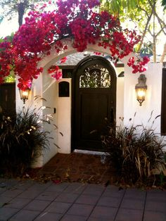bougainvillea arch | If only I could get the lawn guys to stop hacking mine down.