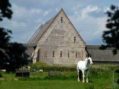 irish barns | TG4426 : Horse near Waxham Barn