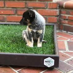 New addition to the Patio Pet Life family! Canopy Swing, Diy Canopy, Hotels With Balconies, Gazebo Replacement Canopy, Balcony Design, Pet Life, Litter Box, Grass, Patio Ideas