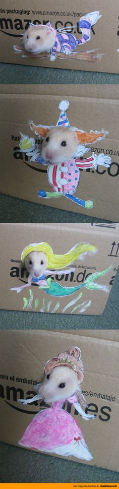 Hamsters divertidos