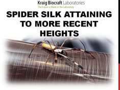 Spider Silk Attaining to More Recent Heights Spider Silk, Spider Webs, Silk Thread, Presentation, Steel, Times, Iron
