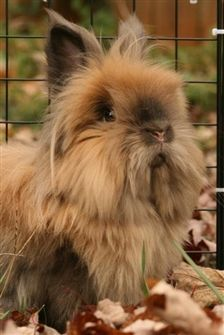 Our new pet, named Slipper Animals Of The World, Animals For Kids, Animals And Pets, Baby Animals, Cute Animals, What Is America, Rabbit Behavior, Lionhead Rabbit, Rabbit Run