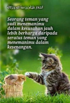 Kucing Dalam Al Quran : kucing, dalam, quran, Seekor, Kucing, Motivasi,, Kata-kata,, Kata-kata, Motivasi
