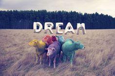 Sheep / Dream