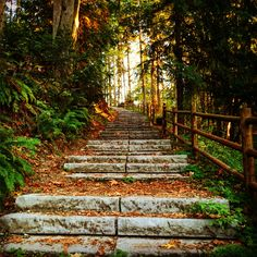 Stairways of nature.