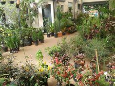 Plantas área externa