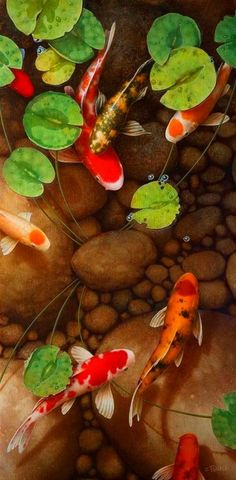 Koi, or more specifically Nishikigoi (brocaded carp), are ornamental varieties of domesticated common carp (Cyprinus carpio) that are kept for decorative purposes in outdoor koi ponds or water gardens. www.ContainerWaterGardens.net/fish-for-container-water-gardens